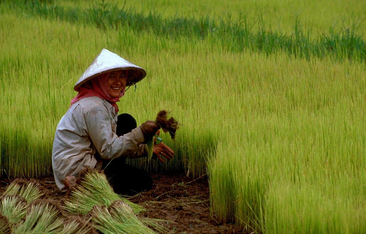 rice asia