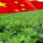 China Soybean Import
